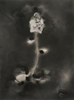 http://www.nilskarsten.de/files/gimgs/th-32_5_5_black-flower-4.jpg