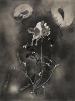 https://www.nilskarsten.de/files/gimgs/th-32_5_5_black-flower-5.jpg
