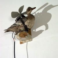 https://www.nilskarsten.de:443/files/gimgs/th-15_15_freedom-fighter-birdweb.jpg